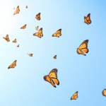SWV-Butterflies